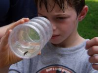 Insect Inspectors- August 2 to 6 (Ages 7-13)